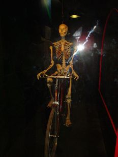 Bicyclist Skeleton
