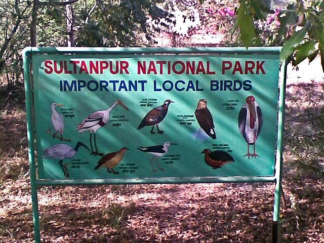 Sultanpur National Park Haryana