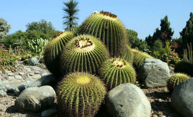 cactus garden at botanical garden and nature park of chandigarh