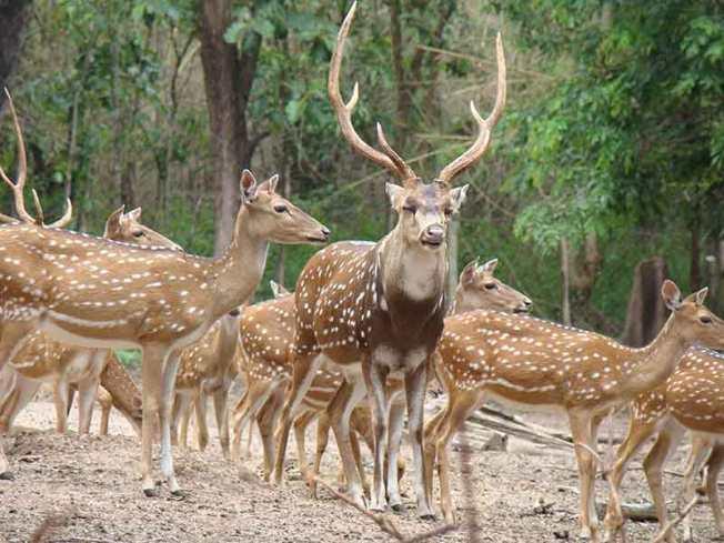 Deer Park Orissa